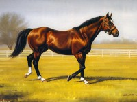 ������� ���� ��������, ������ �������, H��c��� �a�c��, Northern Dancer, Anthony M.Alonso 1280x1024