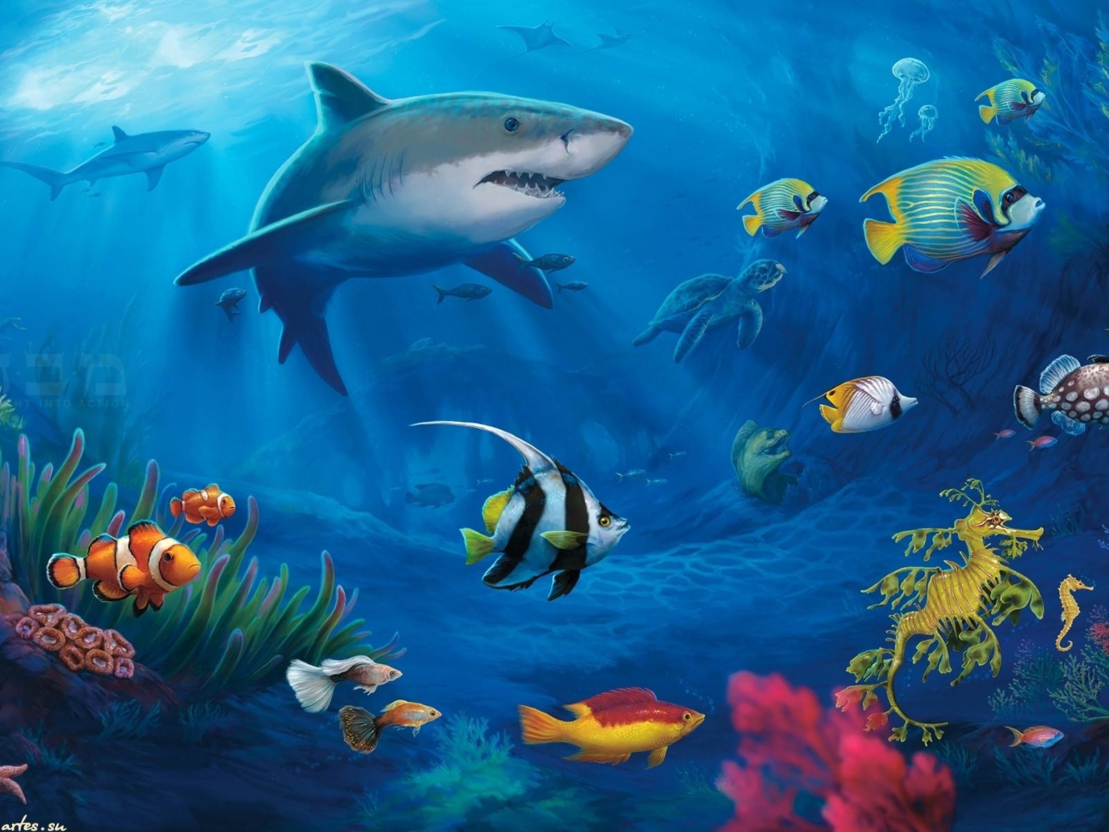 Обои подводный мир акула рыбы 1600x1200