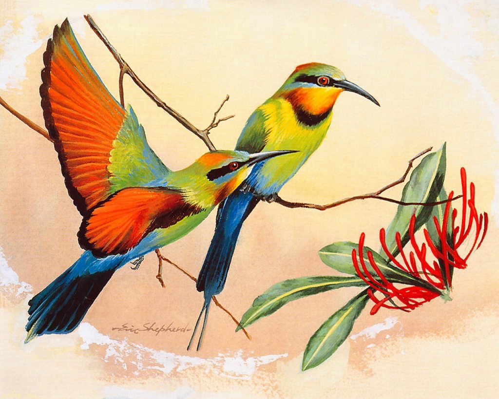 Bird pictures to paint Animal Pages to Color Online - A - m