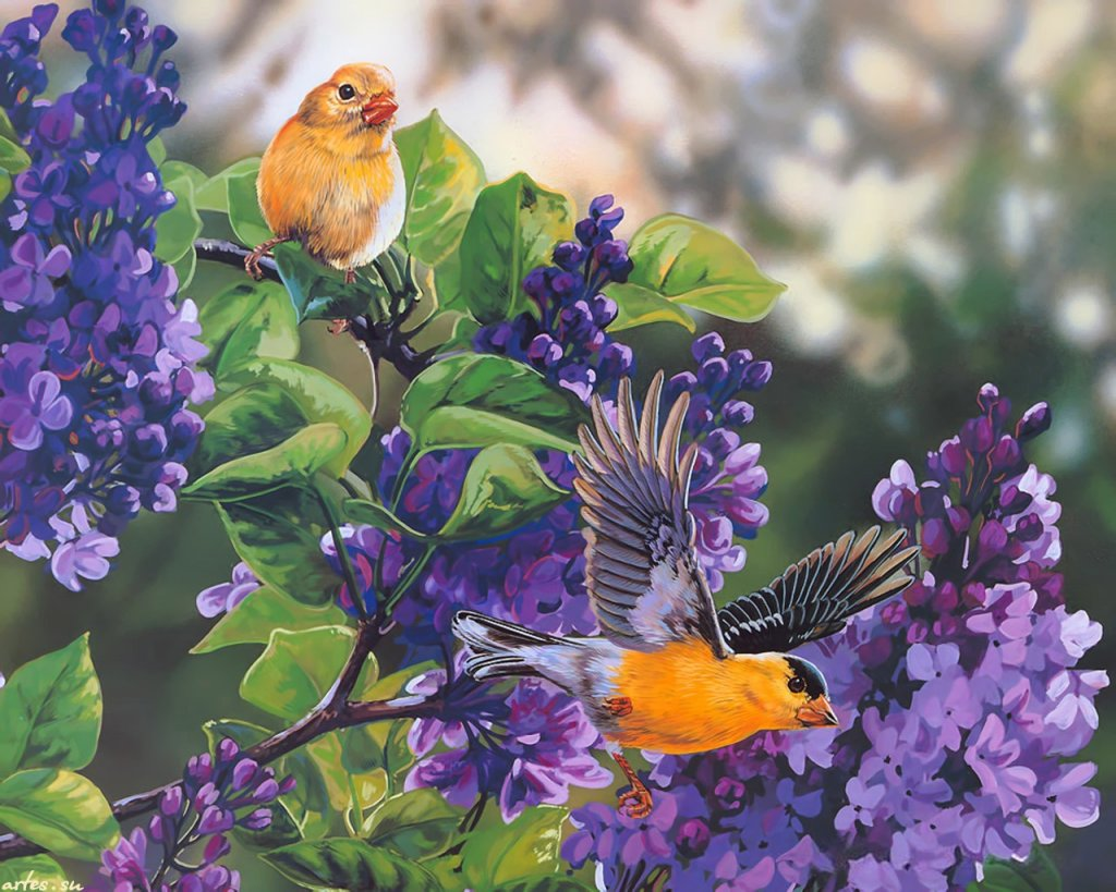 Скачать обои певчие птицы на ветках сирени, Janene Grende 1024x768