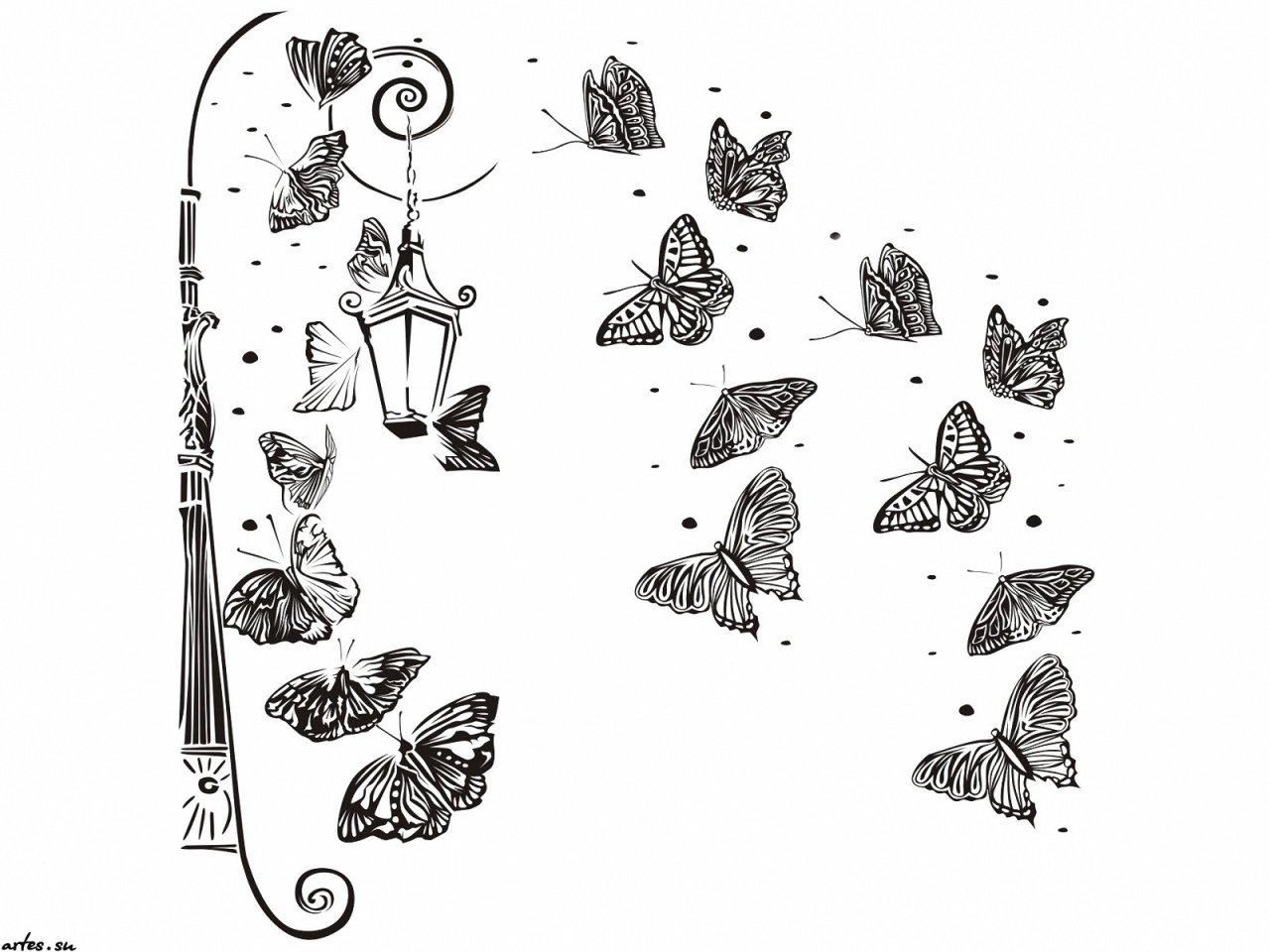 Скачать обои черно белые обои бабочки