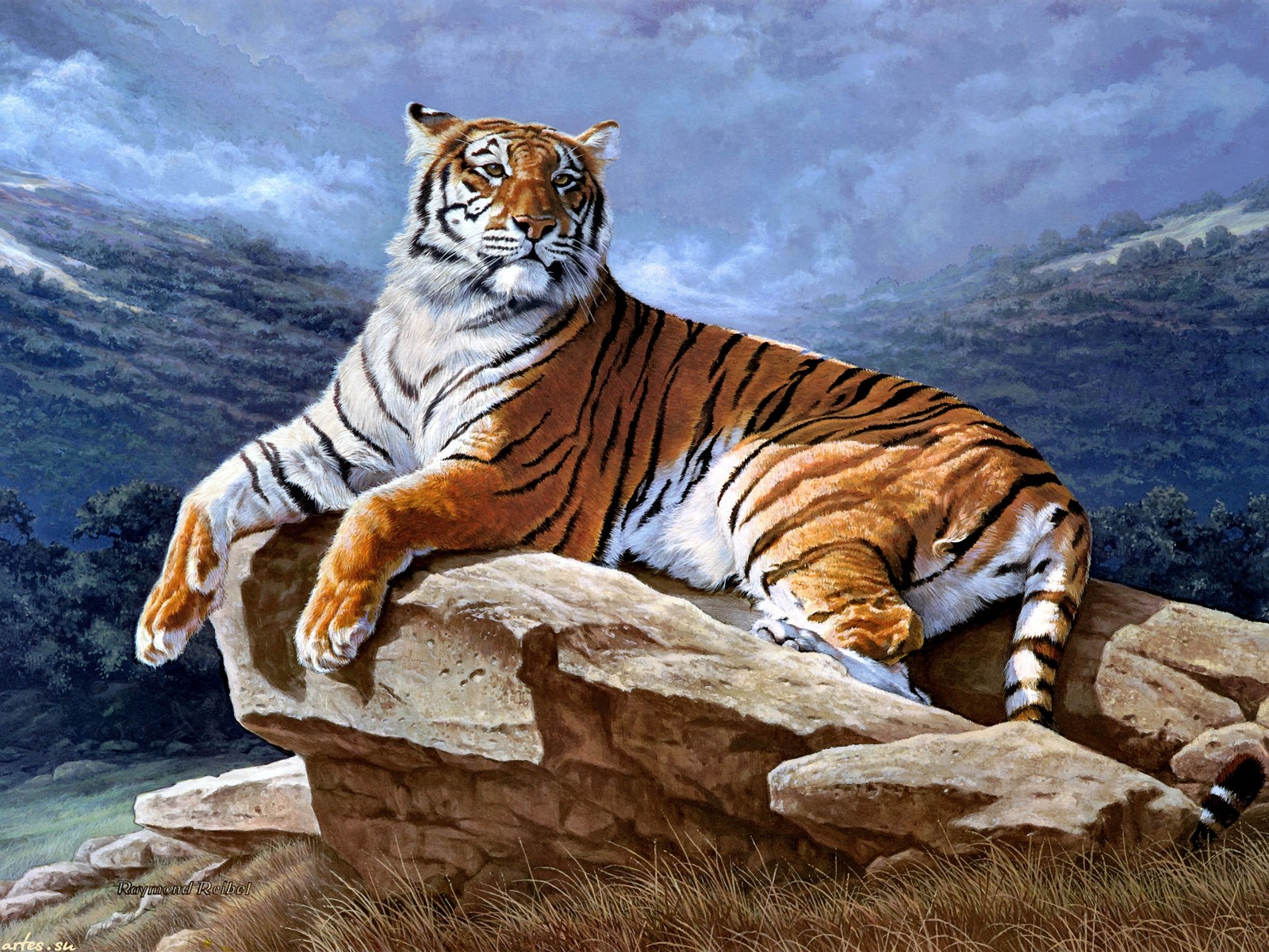 Beautiful tiger скачать картинку бесплатно на смартфон, планшет и.