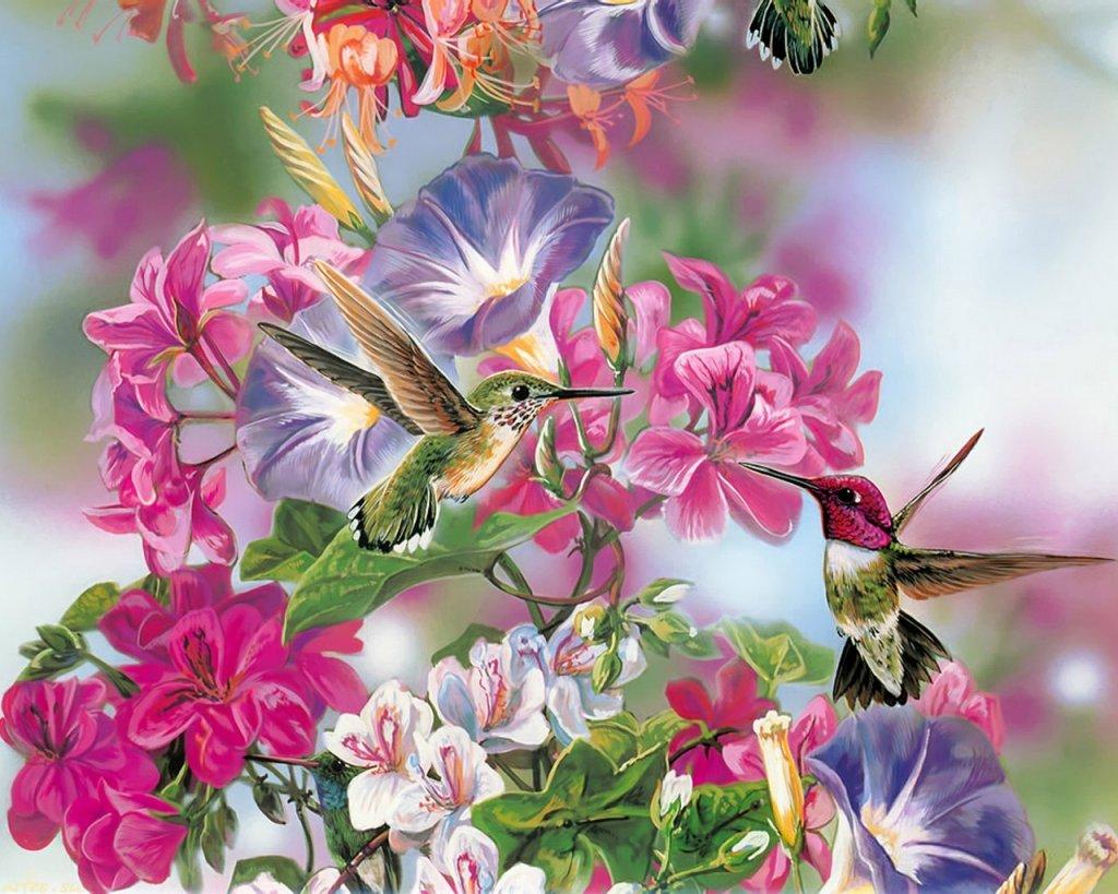 Скачать обои птицы, нектарницы и цветы, Janene Grende 1024x768