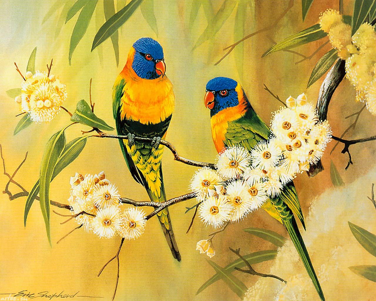 Обои для рабочего стола птицы попугаи