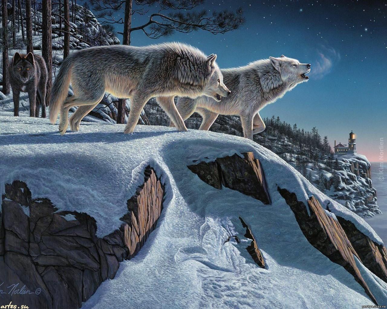 Скачать обои дикие животные зимняя