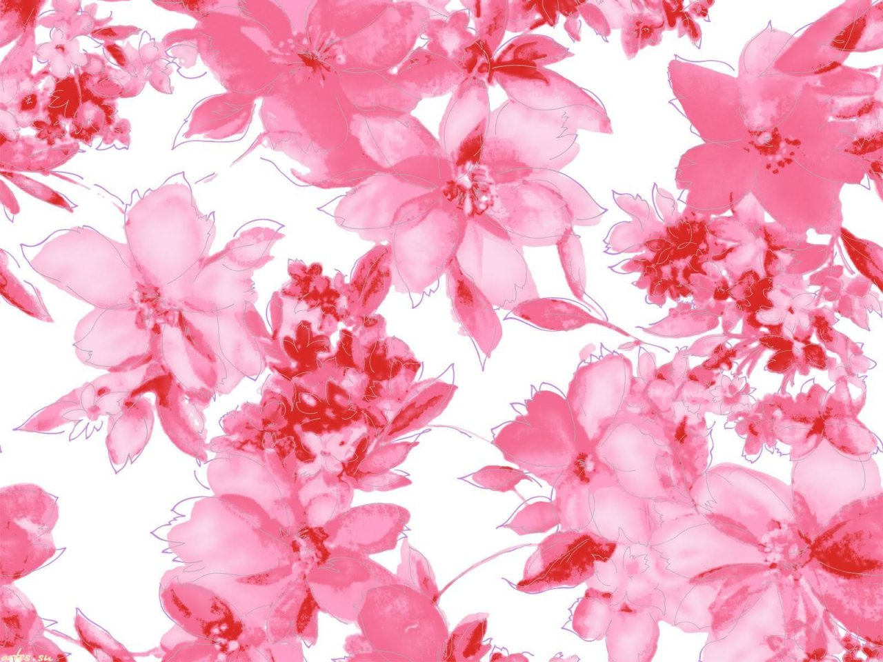 Скачать обои розовые цветы на белом