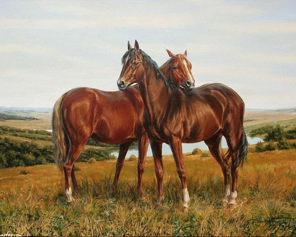 Скачать обои животные, лошади на лугу, Татьяна Данчурова 1024x768