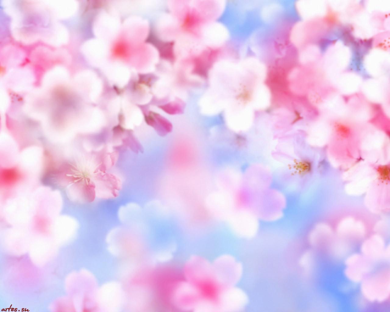 Обои цветы