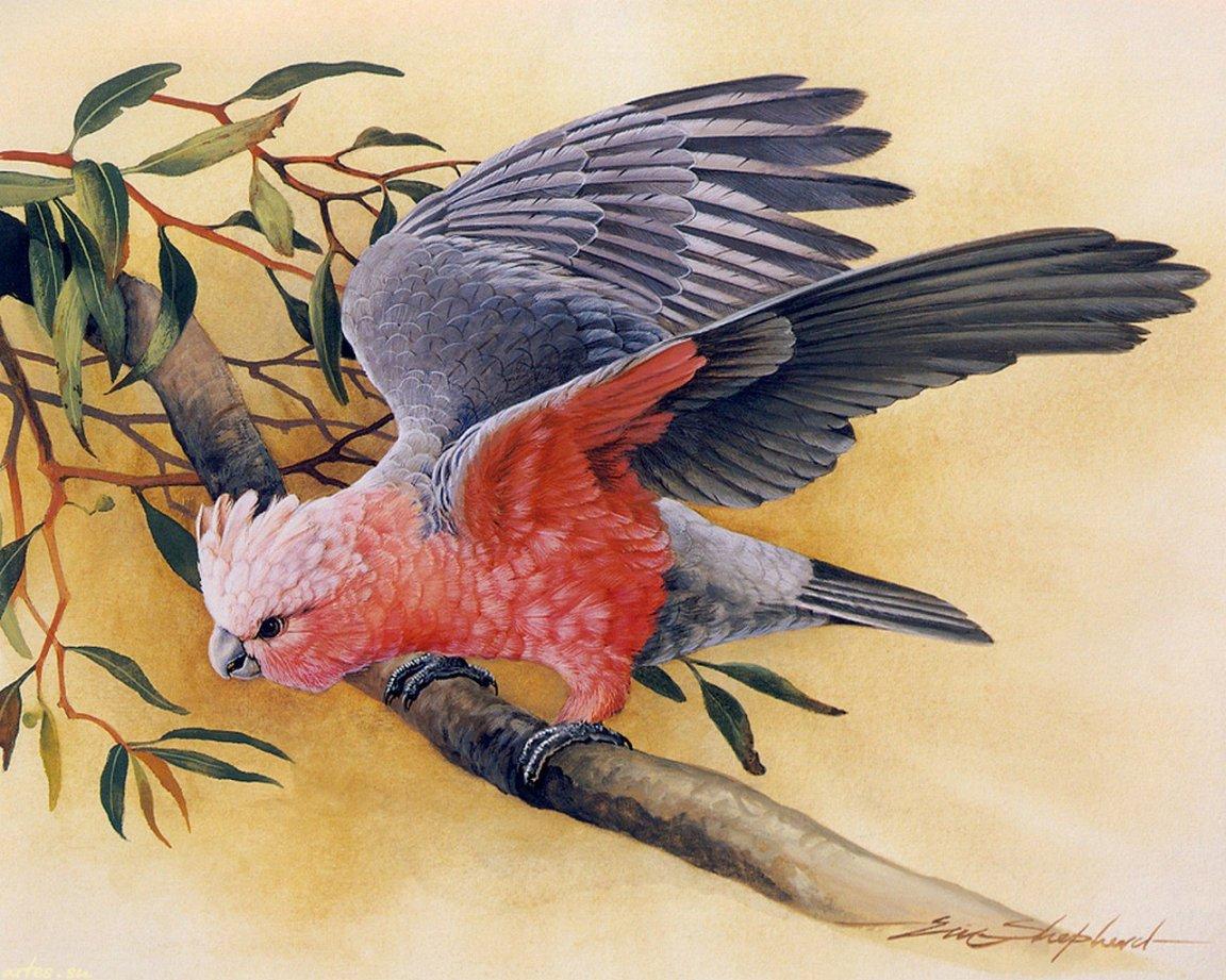 Фото красивой нарисованной птицы