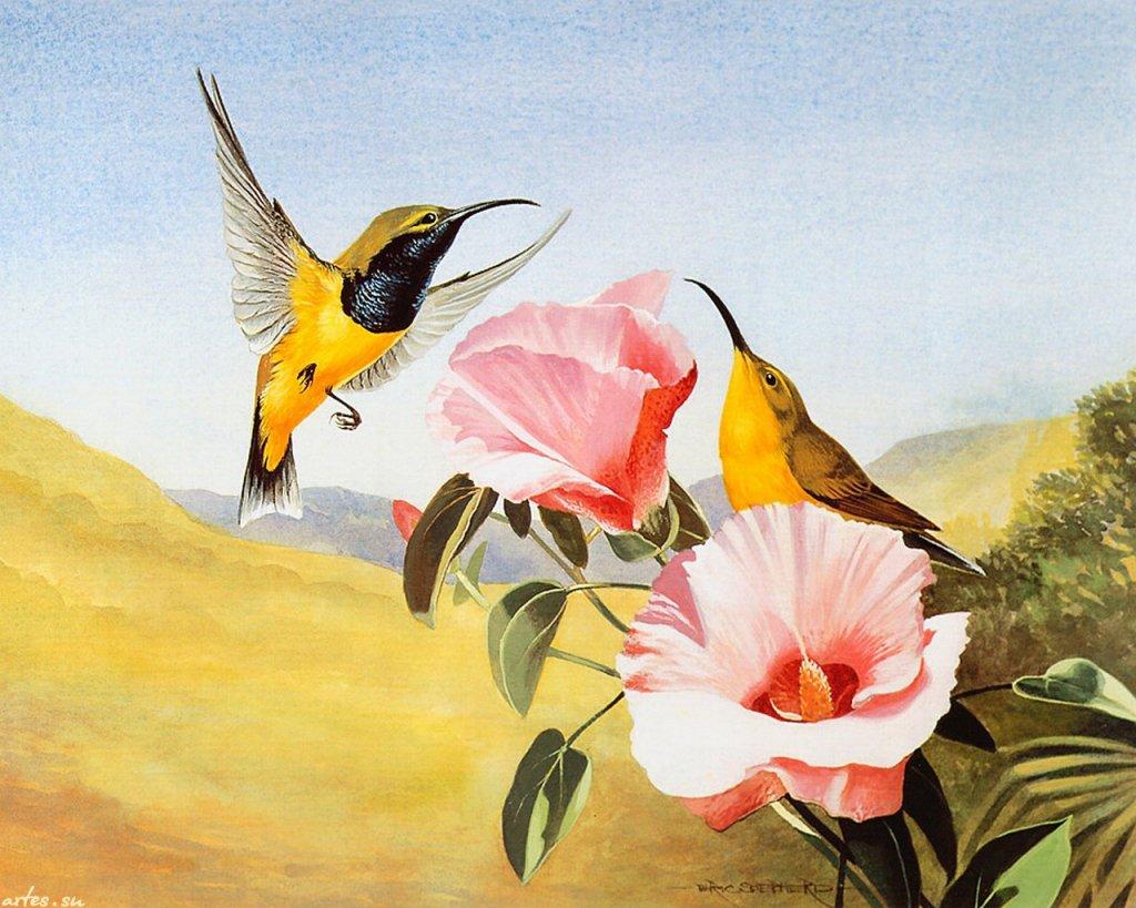 Скачать обои птицы, желтобрюхая нектарница, Eric Shepherd 1024x768